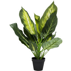 Deco Plant Dieffenbachia 50cm