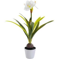 Deco Plant Amaryllis White 78