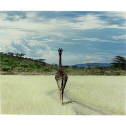 Picture Glass Savanne Giraffe 100x120