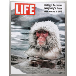 Picture Frame Magazin Monkey 83x63