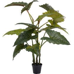 Растение декоративное   Taro 180cm
