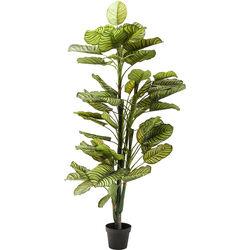 Deco Plant Dieffenbachia 160cm
