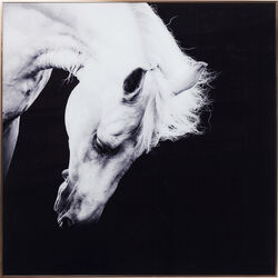 Picture Frame Alu Proud Horse 100x100cm