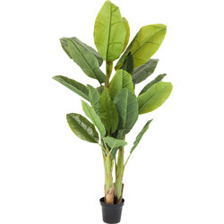 Deco Plant  Banana Tree 180cm