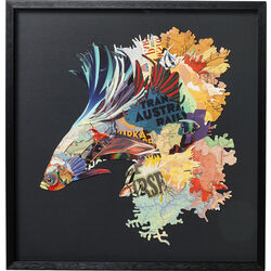 Picture Frame Art Betta Fish Colore Left 65x65cm